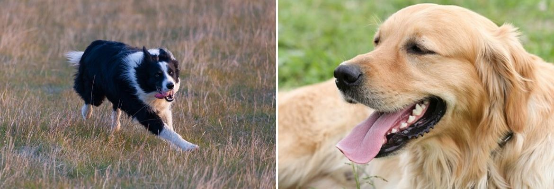 Grasaar hond - Dierenarts Boschhoven Leende Heeze