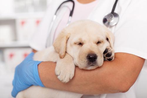 Kosten inenten hond - Dierenkliniek Coppelmans Nuenen