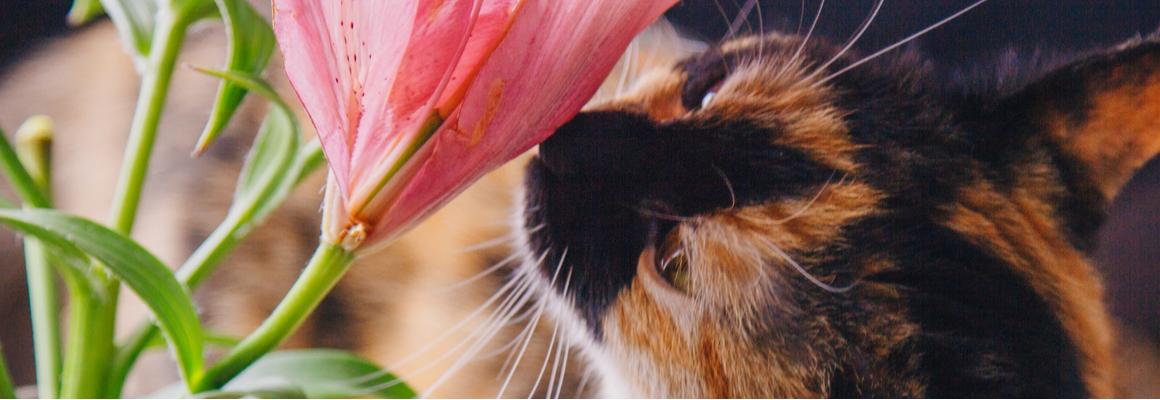 Lelies katten - Dierenkliniek Coppelmans