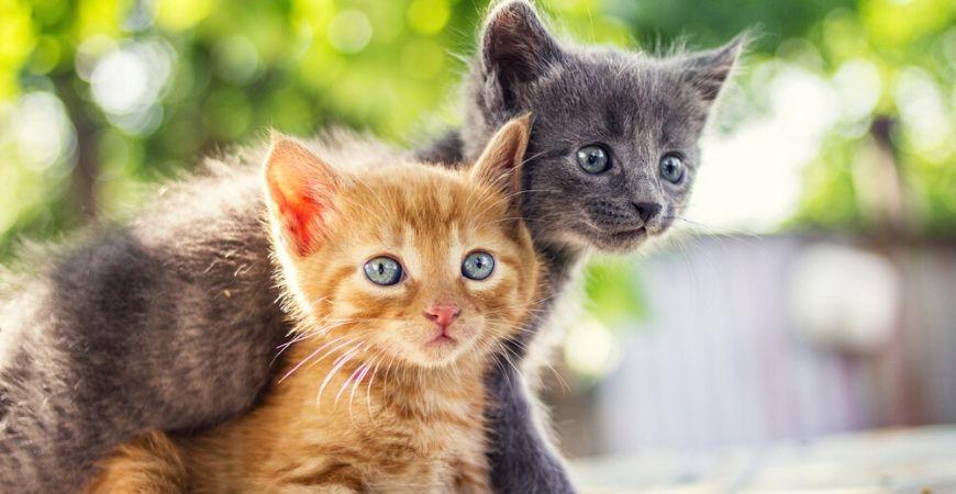 Aanschaf kitten/poes_Dierenkliniek Coppelmans