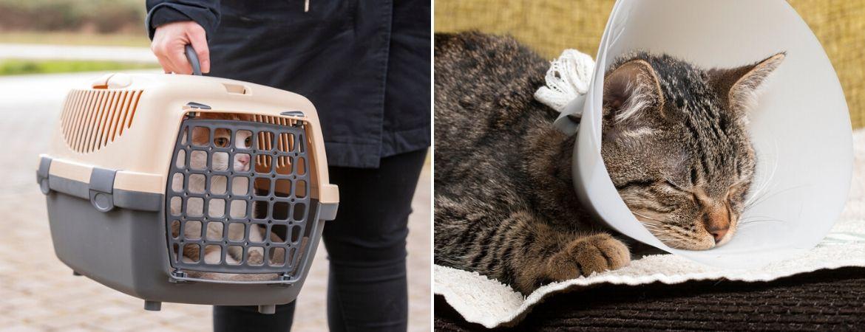 Sterilisatie en castratie kat - Dierenkliniek Coppelmans