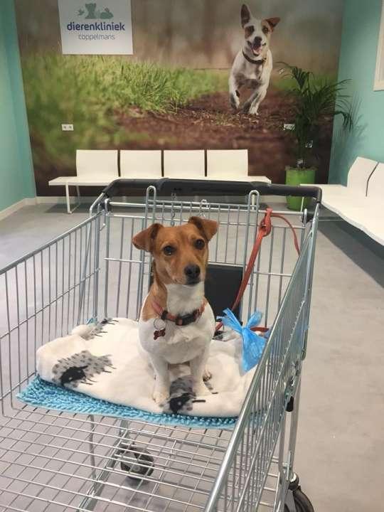 Hond steriliseren in Nuenen