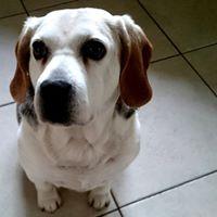 Kosten inenten hond