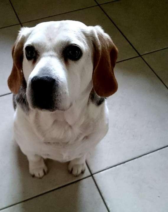 Rabiës vaccinatie voor uw hond