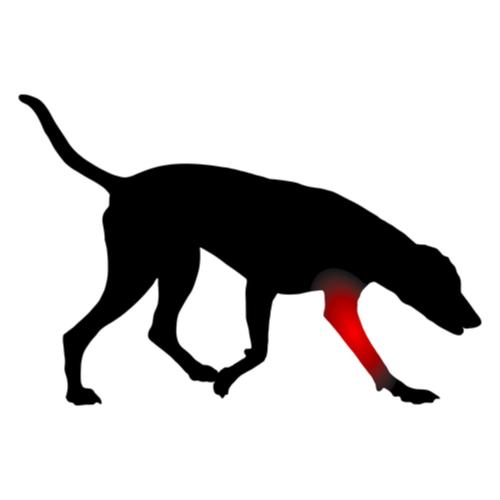 Artrose hond - Dierenkliniek Coppelmans