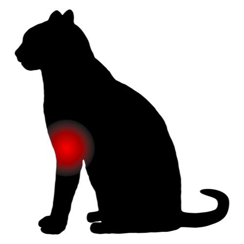 Atrose kat - Dierenkliniek Coppelmans