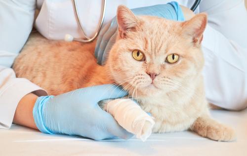 Kosten inenten kat - Dierenkliniek Coppelmans Nuenen
