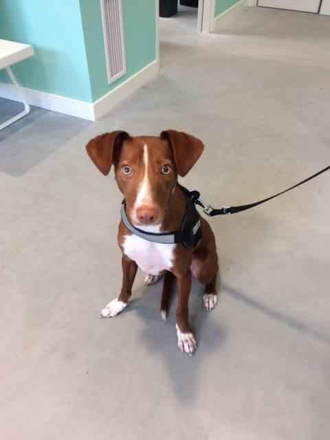 De juiste inentingen voor uw pup